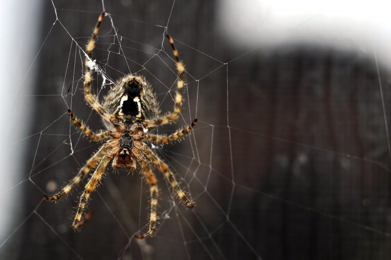 Arachnophobia, fear of spiders associated to human DNA Research