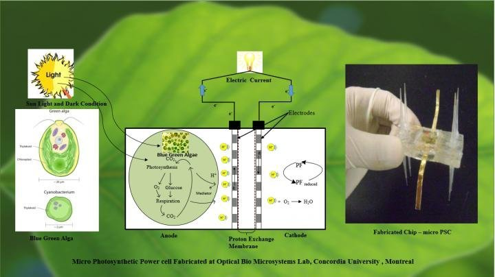 Micro-photosynthesis cell technology