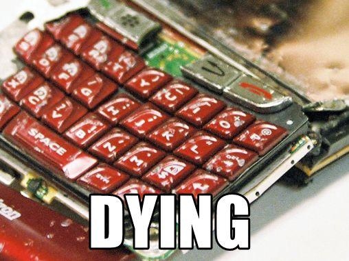 blackberry-dying