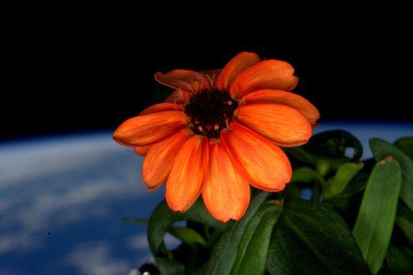 Scott Kelly tweet pictures of Zinnia in space